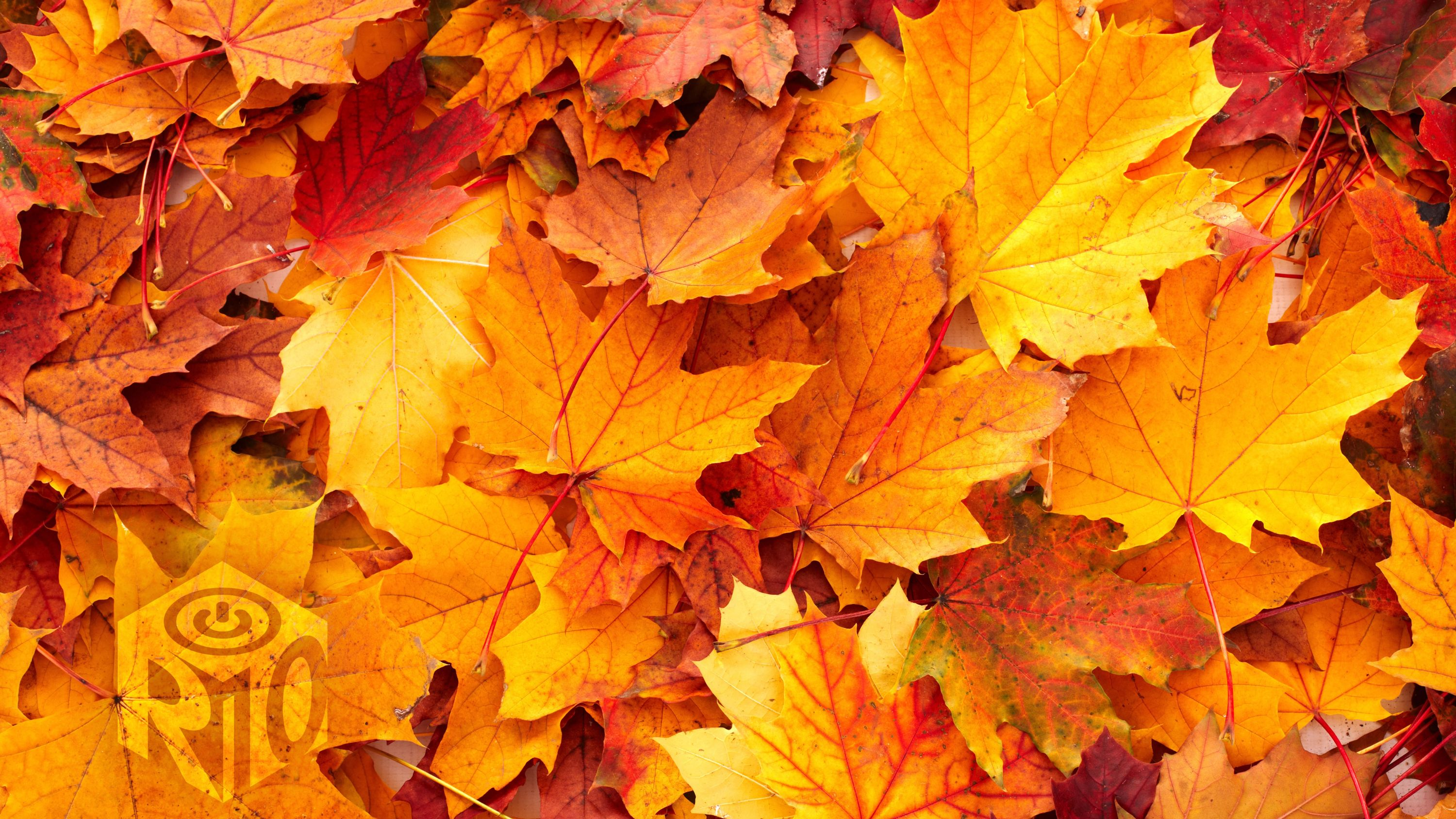 Autumn Leaves in a pile
