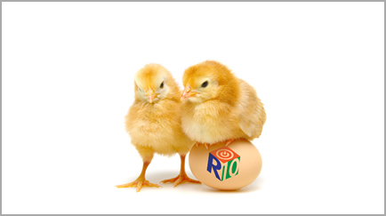 Two Chicks with one sitting on R10 logo egg